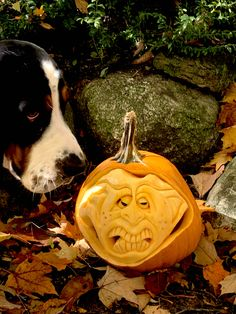 Pumpkin Pictures, New Friends, Animals, Animales, Animaux, Animal, Animais