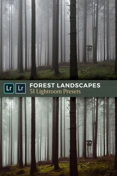 This collection of Lightroom presets is created as a carefully thought-out workflow, and all 51 presets are grouped into seven modules. Quickly and easily achieve an atmospheric and dreamy look for your forest landscape photos in Adobe Lightroom (Desktop and Mobile). #Lightroom #LandscapePhotography #PhotographyTips Forest Photography, Flash Photography, Photography Tutorials, Photography Photos, Landscape Photography, Inspiring Photography, Beauty Photography, Digital Photography, Forest Landscape