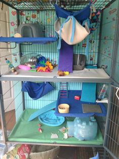 Are Cats Smarter Than Dogs Rat Cage Diy, Pet Rat Cages, Diy Guinea Pig Cage, Chinchilla Cage, Ferret Cage, Pet Ferret, Cute Ferrets, Cute Rats, Critter Nation Cage