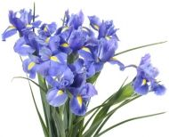 Iris. Natural blooming season: Spring, Summer. Relative cost: Low-Mid