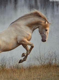 Graceful leaping horse.
