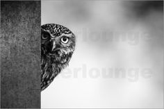 Kiekeboe - Peekaboo (Little Owl) by Erwin Maassen van den Brink