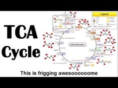 I've forgotten more about biochem than I like to admit, but things might be different if this had been around, LOL!! The Krebs Cycle, rapped to the tune of Macklemore's