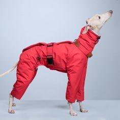 vemvem® - Italian Greyhound & Whippet Clothes Dog Harness, Dog Leash, Italian Greyhound Clothes, Dog Booties, Pet Clothes, Dog Clothing, Dog Furniture, Dog Clothes Patterns, Grey Hound Dog