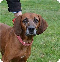 Coonhound Mix Dog for adoption in Delaware, Ohio - Kroger