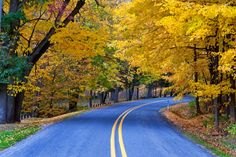 Pelas estradas douradas. Michigan, USA.