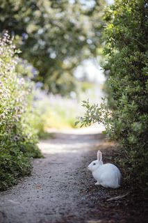 white rabbit beside plants Photo by ninjason on Unsplash Image Page 49680 Free Rabbits, Rabbit Pictures, Animals Of The World, Landscape Lighting, Solar Lights, Gradient Color, Hd Photos, Garden Landscaping, Mammals