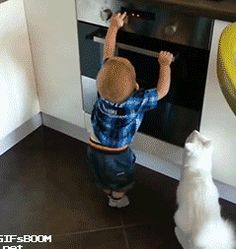 Cat Prevents Little Human From Getting Into Trouble