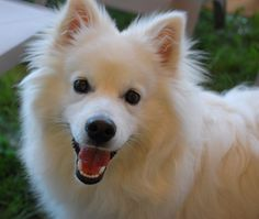 Interpreting Facial Expressions of Dogs http://thebark.com/content/interpreting-facial-expressions-dogs?utm_campaign=crowdfire&utm_content=crowdfire&utm_medium=social&utm_source=pinterest  #dog #dogs #dogsoftwitter #pets #pet #puppy #doglover #dogfriendly   #pup
