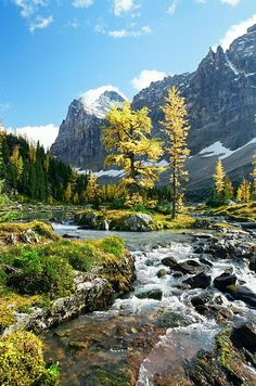 ..Opabin Plateau in Yoho National Park, B.C. Canada by Franks Townsley..