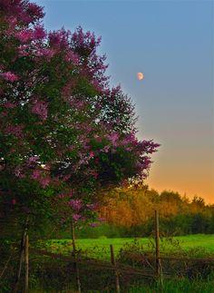 Romantic countryside