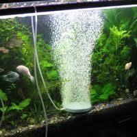 Kuvahaun tulos haulle akvaario ilmapumppu Aquarium, Goldfish Bowl, Aquarius, Fish Tank