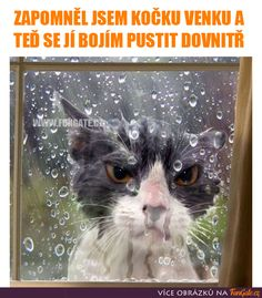 WEATHERMAN - LOLcats is the best place to find and submit funny cat memes and other silly cat materials to share with the world. We find the funny cats that make you LOL so that you don't have to. Silly Cats, Cats And Kittens, Cute Cats, Animals And Pets, Funny Animals, Cute Animals, Pet Dogs, Dog Cat, Cats Outside