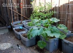 Planting a container Vegetable Garden (using old Rubbermaid bins is a good idea)