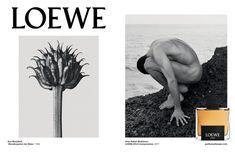 All Arno, Karl Blossfeldt, Perfumes Loewe, Art Commerce, Brand Campaign, Fade Away, Shiseido, Print Ads, Logos