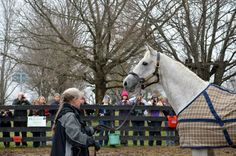 Silver Charm at home at Old Friends!