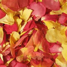 FiftyFlowers.com - Bright Sorbet Freeze Dried Rose Petals  Can use over and over