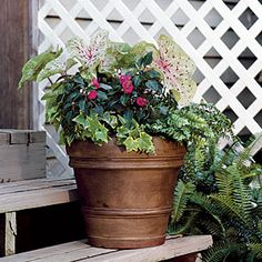 Ivy, Ferns, Impatiens & Caladiums | Spectacular Container Gardening Ideas - Southern Living