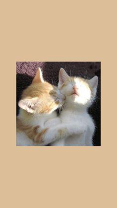 Cute Cat Wallpaper, Soft Wallpaper, Aesthetic Pastel Wallpaper, Kawaii Wallpaper, Tumblr Wallpaper, Aesthetic Wallpapers, Iphone Wallpaper Vsco, Homescreen Wallpaper, Wallpaper Backgrounds