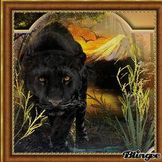 Big Cats 2