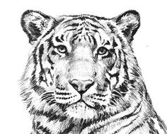 Tiger Coloring Pages Printable - coloring