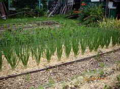 Опилки для огорода