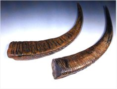 Buffalo horns for Korean horn bow.