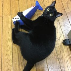 見たニャッ!  1人遊びに熱中していたクロちゃんじっと見ていたら、ハッと振り向く  #猫 #黒猫 #cat #けりぐるみ  #遊ぶ #もとcfukudamotoko2017/12/12 20:21:36