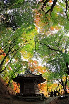 #Japan #autumn. Look at the color in those trees, so much variety.