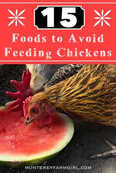 Confused as to what is safe for your chickens? This list will help you! Types Of Chickens, Fancy Chickens, Pet Chickens, Chickens Backyard, Fruits And Vegetables List, Chicken And Vegetables, Fresh Vegetables, Chicken Home, Chicken Feed