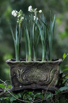 Must try chives or other aliums in old, oblong planter.  Thanks for a great idea.