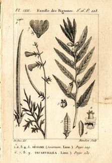 "buffon botanical french 1775 engraving 4 x 6""  $25 - 02"