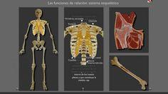 Un sitio para recorrer el cuerpo de forma interactiva