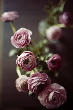 Ranunculus of a shade perfect for my color scheme.