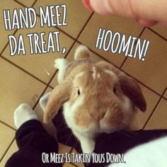 Adorable Bunnies, Funny Bunnies, Cute Bunny, Adorable Animals, Funny Animals, House Rabbit, Pet Rabbit, Bunny Quotes, Ferrets
