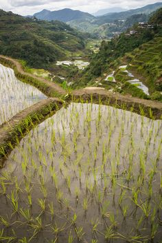 Banaue Rice Terraces, Philippines by knet2d