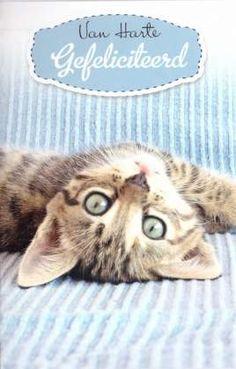Poezenkaart Cats, Animals, Carton Box, Gatos, Animaux, Animales, Cat, Kitty, Animal