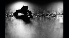 """""""La Migración del sapo"""" del fotógrafo alemán Klaus Tamm fue la ganadora del Concurso de Fotografía de Naturaleza que organiza la Gesellschaft Deutscher Tierfotografen, la Sociedad Alemana de Fotógrafos de Animales. Tamm tomó la imagen mientras intentaba salvar un grupo de sapos que cruzaban una carretera."""