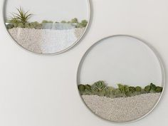 Exquisite round glass terrariums hang on the wall