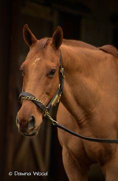 2003 Kentucky Derby winner Funny Cide at Kentucky Horse Park