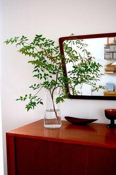 ミラーの前にグリーンを置けば、鏡にもグリーンが映り、倍になってより緑が豊かになる技ありアイディア!すっきりとした南天の枝を刺して、清々しく爽やかに♫