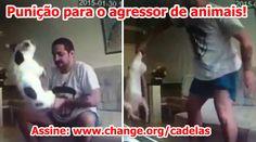 Abaixo-assinado · Processe o agressor que maltratou duas cadelas no Rio de Janeiro! · Change.org