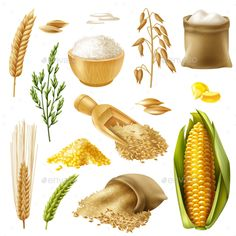 Buy Cereals Icon Set by macrovector on GraphicRiver. Colored and realistic cereals icon set with wheat rice barley oat corn vector illustration Food Drawing, Drawing For Kids, Wheat Rice, Milk Makers, Mobile Ui Patterns, Baking Quotes, Toddler Learning Activities, Food Pyramid, Graphics Fairy