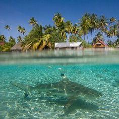 Good swimming!