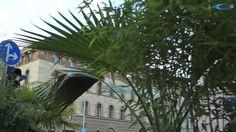 URBAN PARADISE - ein multimedialer Palmengarten von Michael Pendry @ Streetlife Festival, Munich 2014