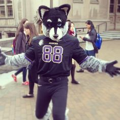 GO HUSKIES! In Purple and Gold, thank you very much, not Black.