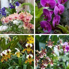 Orchids in Biltmore's Conservatory peak January - March but are always in bloom throughout the year!