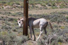 Horses that pole dance... http://www.facebook.com/cowboymagic