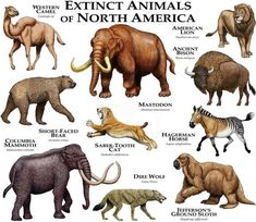 prehistoric animals Fine art illustration of some species of extinct mammals of North America Species featured: AMERICAN LION (Panthera leo atrox) ANCIENT BISON (Bison antiquus) CO Short Faced Bear, American Lion, North American Animals, Dire Wolf, Extinct Animals, Rare Animals, Wild Animals, Strange Animals, Animal Illustrations