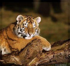 Taking a little nap